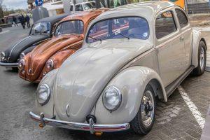 Splitwindow Beetle at Ninove 2019